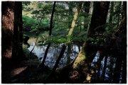 strawies_09-jpg