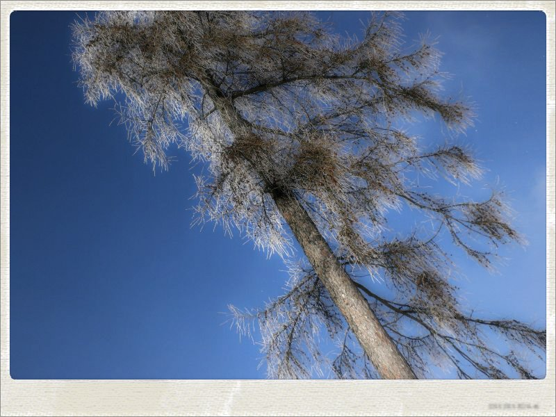 winter03-jpg