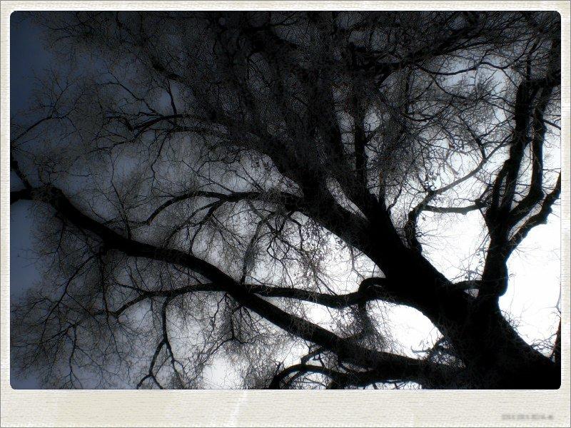winter04-jpg