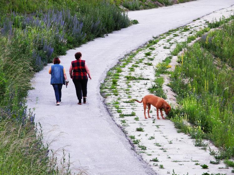 Spazieren mit Hund am Salzachdamm