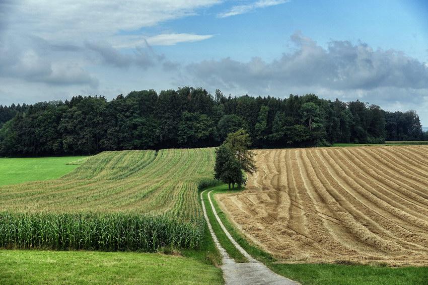 Göminger Felder