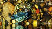 Fischen im politischen Wasser