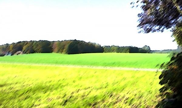 ReitlwaldHintergrund_1-600x357