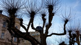 Stadtbäume,Franz Josef Straße