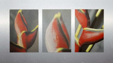 exotoc blossom   play of art by jan oechler